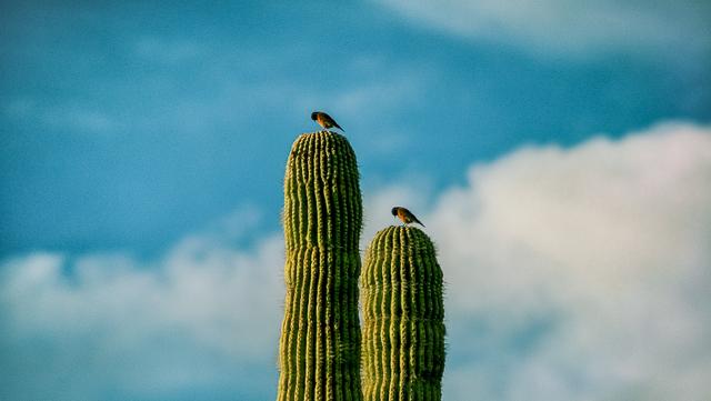 2birds_2.jpg