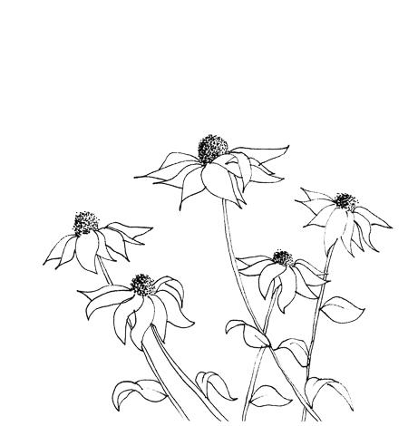 Daisies_2.jpg