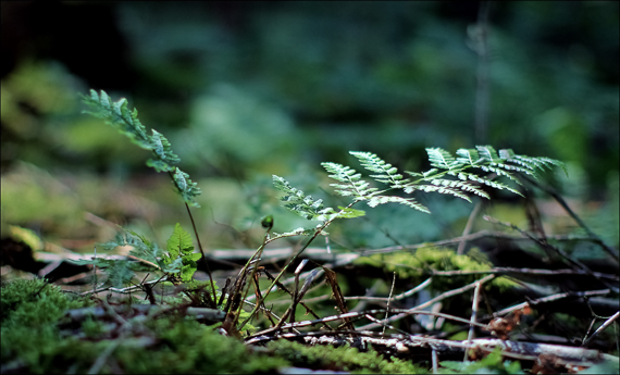 ForestFloor.jpg